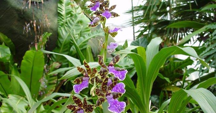 Reinhart orchideeen haren - Ideeen buitentuin ...